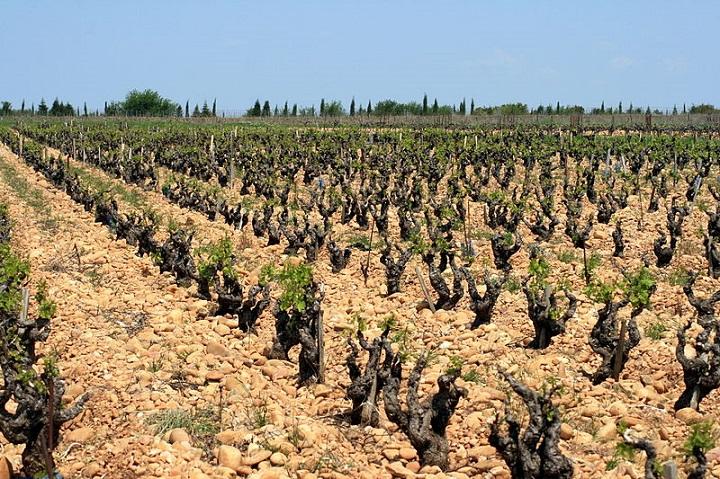 800px-Vigne_et_galets_à_Châteauneuf-du-Pape